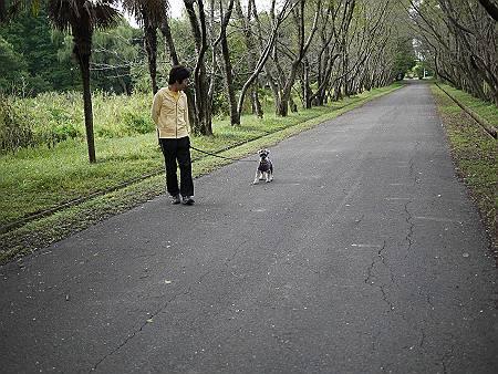 秋ヶ瀬公園-4