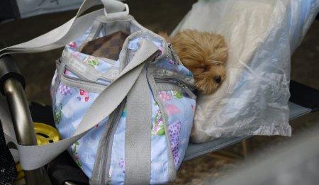 バッグで眠るプッチ