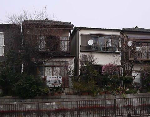 20110115-3.jpg