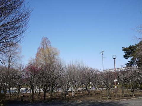 20110213-6.jpg