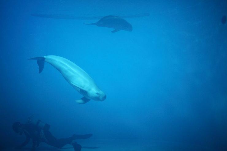 リニューアル宮島水族館