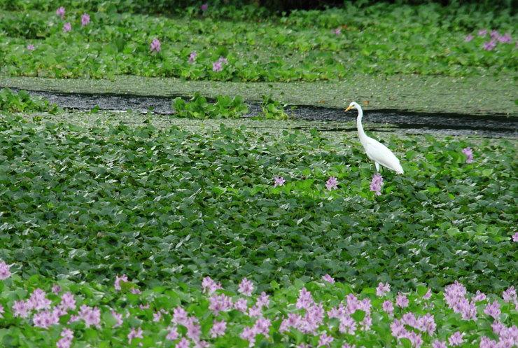 水草の上でお散歩