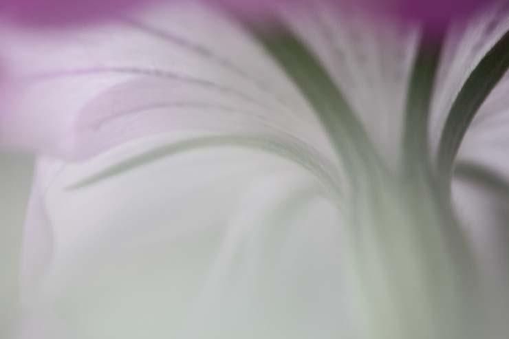 花びんの花