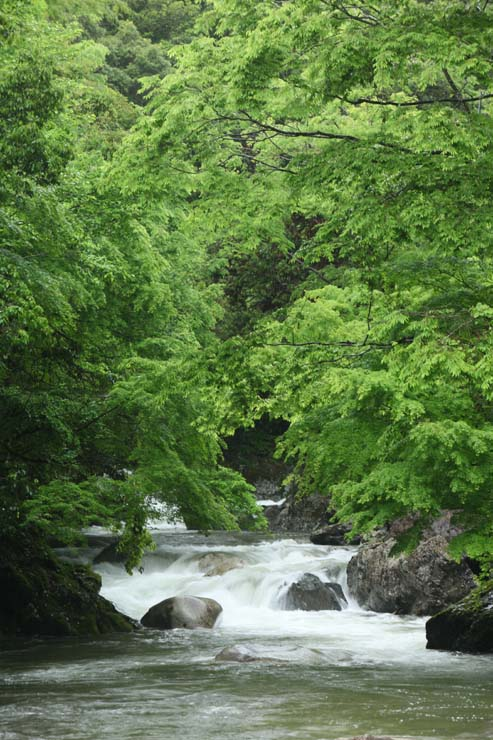 梅雨の木谷峡Ⅰ