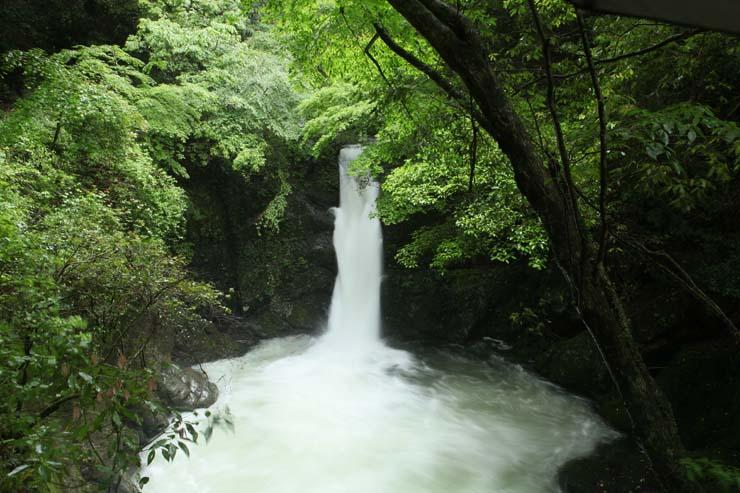 梅雨の木谷峡Ⅱ