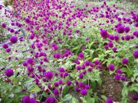 10.10.21 船木の花1