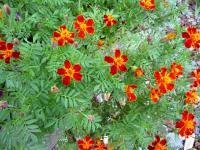 10.10.21 船木の花2