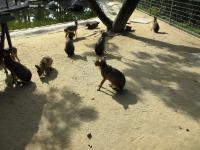 2011.10.26 海の中道海浜公園 ネズミ科の…1