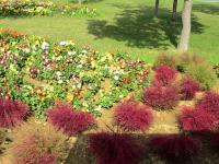2011.10.26 海の中道海浜公園の花2