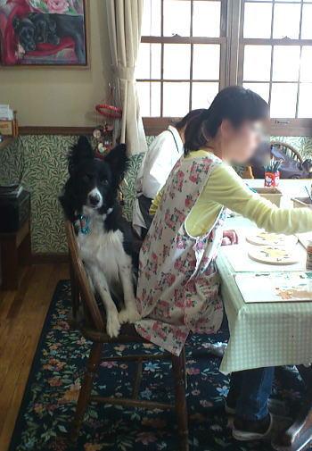 12-05-10ホスト犬