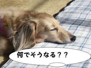 P1100950_20120825152526.jpg