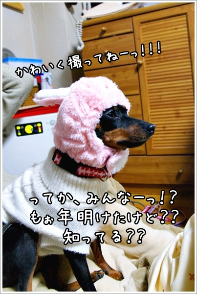 DSC01784-0-0061.jpg