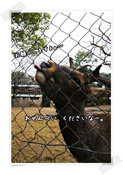 DSC01838-01.jpg