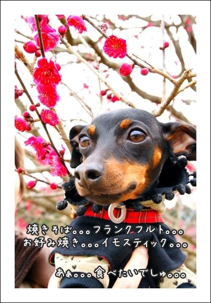 DSC04147-01.jpg