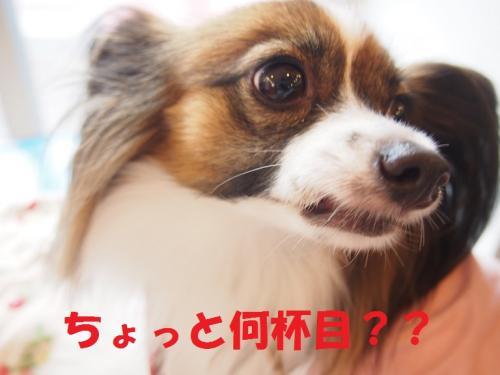 P9141502・・・雲convert_20141018054653
