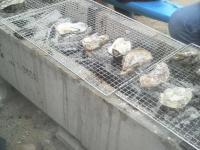 安浦牡蠣祭り