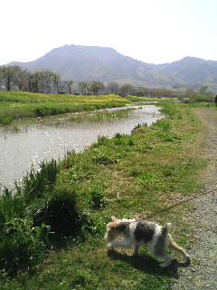 image/2010-05-04T08:22:372