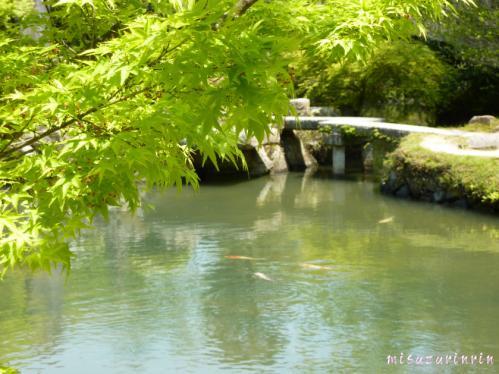 近水園13