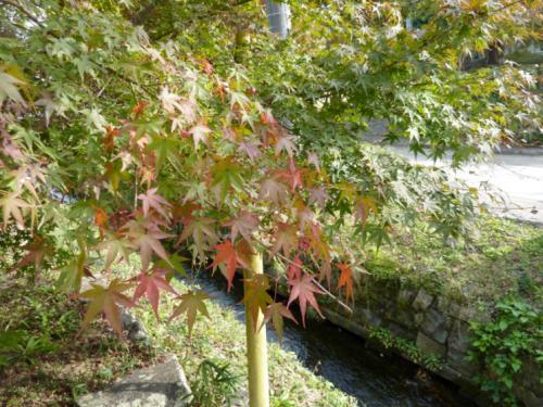 2011.11.12紅葉17 (2)