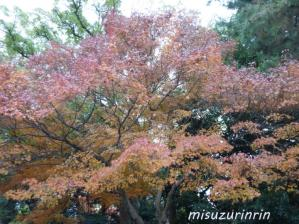 京都旅行33