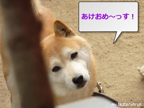 3日のこう太5(2)