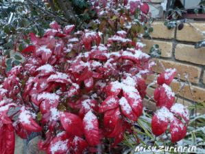 雪降った6