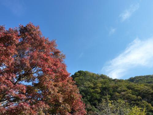 2011.11.12紅葉