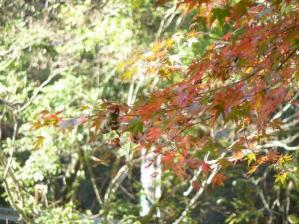 2011.11.12紅葉11