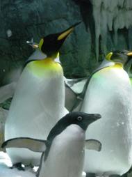 海遊館(ペンギン)