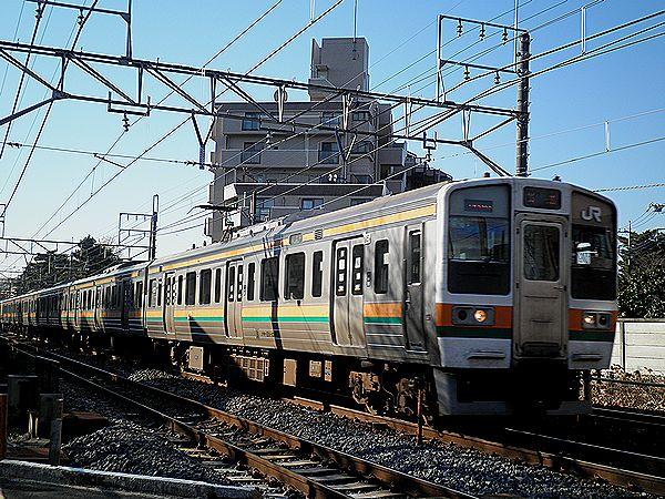 高タカ211系・盆栽