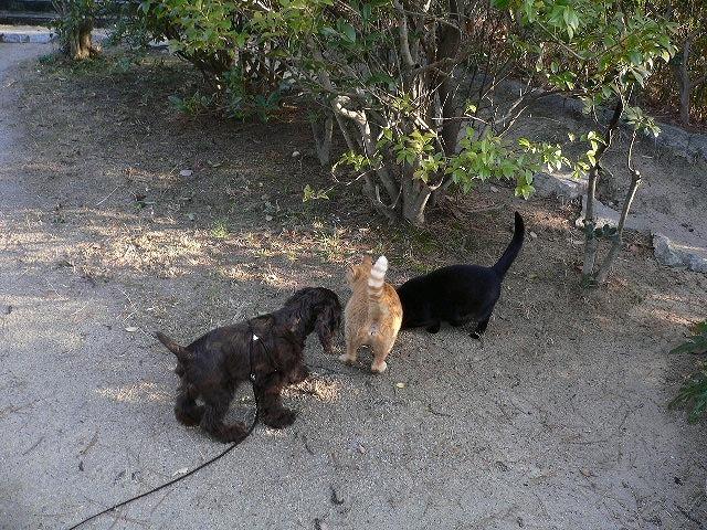 猫とルーク