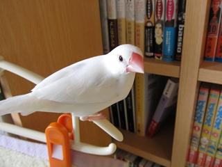 till_blog2010dec000.jpg