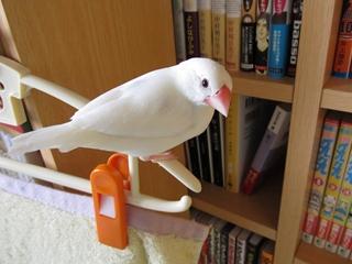 till_blog2010dec003.jpg