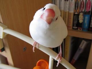 till_blog2010dec006.jpg