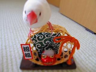 till_blog2010dec011.jpg