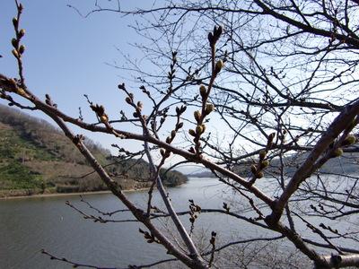 府中湖 2