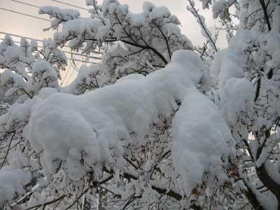 どっかりと…雪
