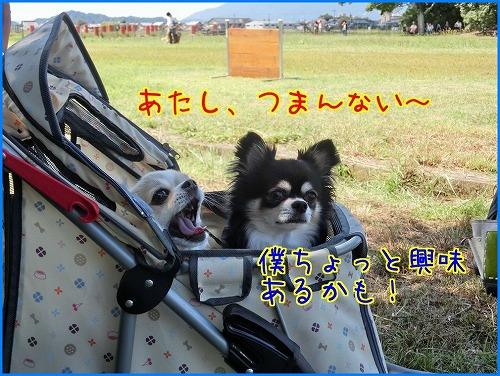 2014奈良訓練 (16)