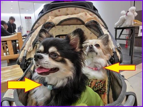 dogfesta (5)