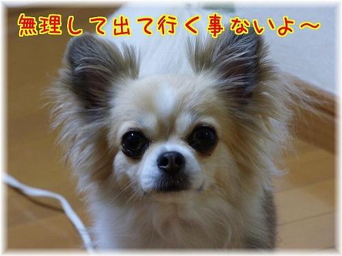 台風19 (2)