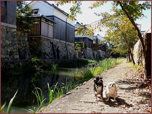 近江八幡1 (8)