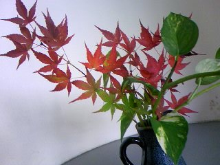 きれいな紅葉!