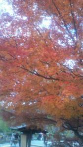1112円山公園1