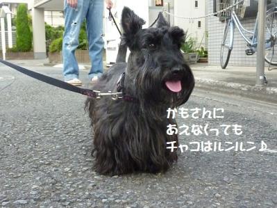 1_20110903224028.jpg