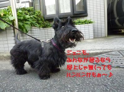 1_20110903224215.jpg