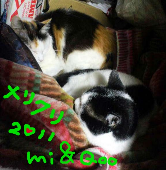 ミイとクーからメリクリ2011