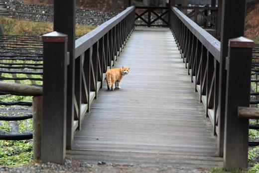 橋の上のねこ4
