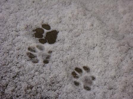メイの足跡