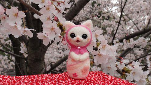 桜マト夙川1