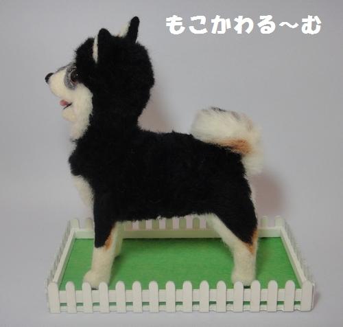 黒柴ちゃん4